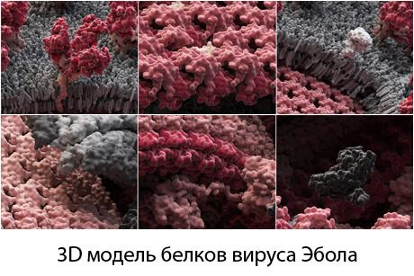 3D модель белков вируса Эбола