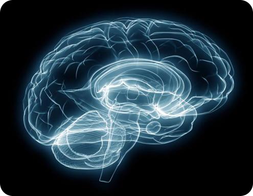 Мозг. Головной мозг. Инсульт. Препарат от инсульта.