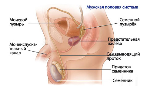 Половая жизнь у мужчины после удаления предстательной железы.