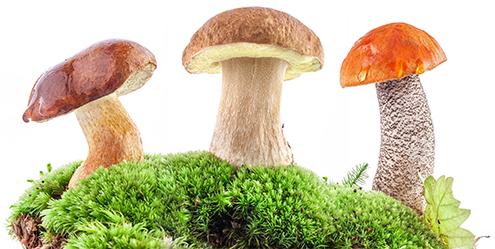 Грибы. Виды грибов.