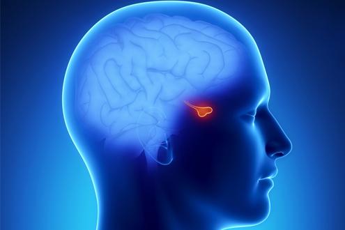 МРТ-исследование. МРТ. МРТ головы. МРТ мозга.